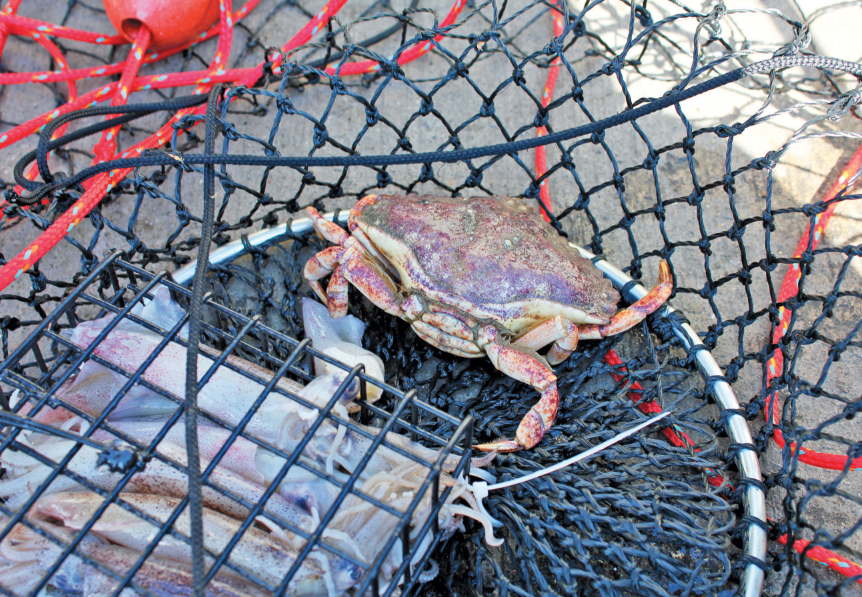 Dungeness Crabbing in Pacifica | Edible Silicon Valley