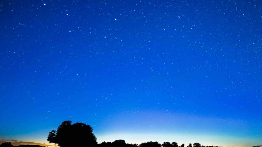 Pinot Harvest Dinner Under the Stars