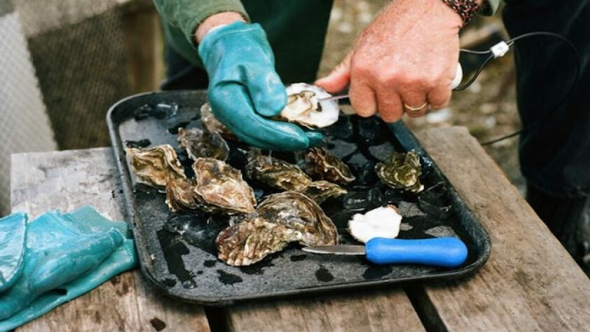 shelling oysters