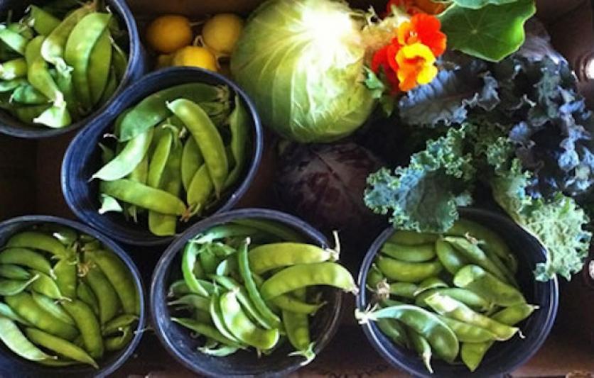 Vegetable Gardening 101 | Edible Silicon Valley