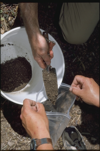 Taking a composite soil sample