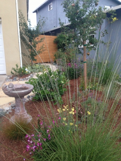 plants in backyard