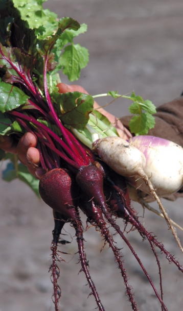 vegetable roots