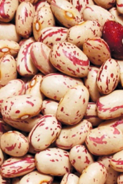 beans from Iacopi farms