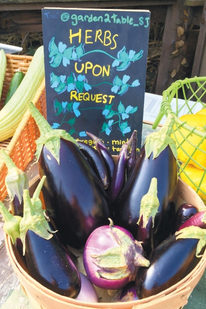 eggplants grown in an urban agriculture zone