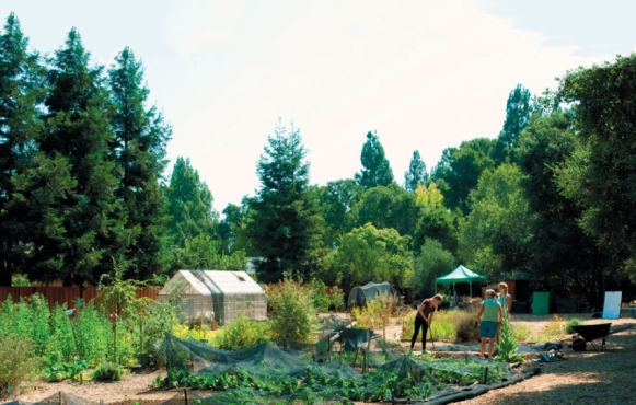 a backyard garden with a greenhouse and netted row of vegetables