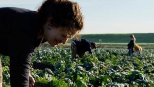 California farmer picking kale